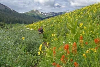 Hiking Crested Butte Colorado-West Maroon Trail